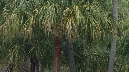 Livistona Palms Banner Total Environmental Concepts