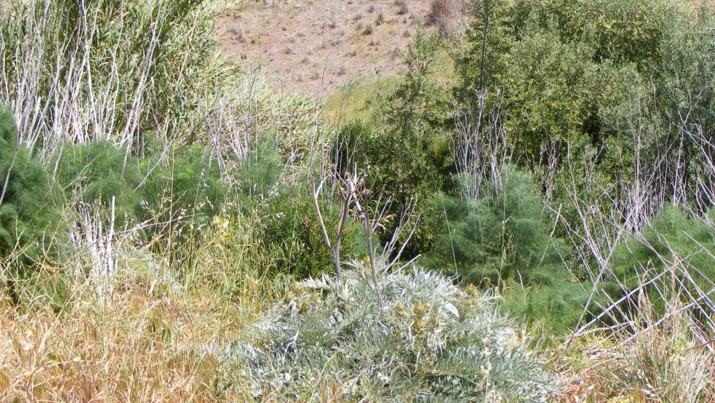 vegetation management banner