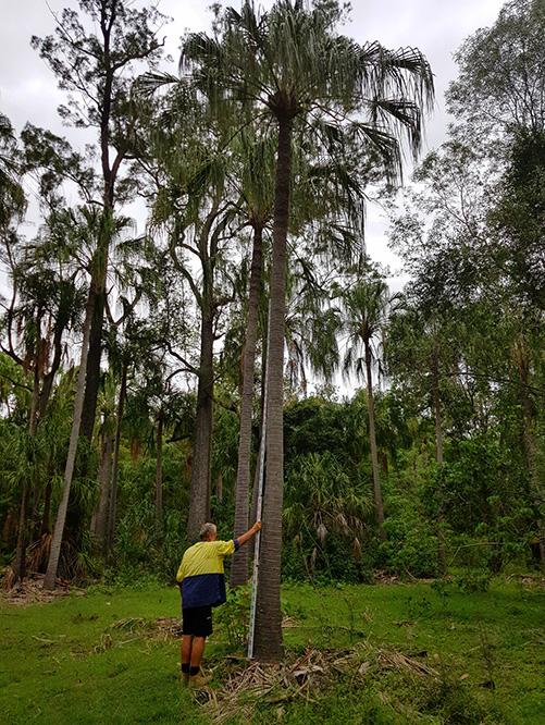 palm relocation logan